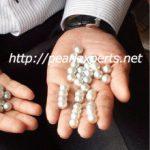 真珠の入札風景 現場から写真が届きました