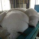 志摩市英虞湾より アコヤ貝の排卵