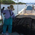 志摩市英虞湾より 自然の脅威を痛感! 大切なアコヤ貝の命を精一杯守ります!!