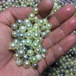浜上げの冬!真珠入札会のシーズンです。