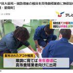 アコヤ貝大量死…愛媛県愛南町で緊急増産の稚貝を真珠養殖業者に無償配布